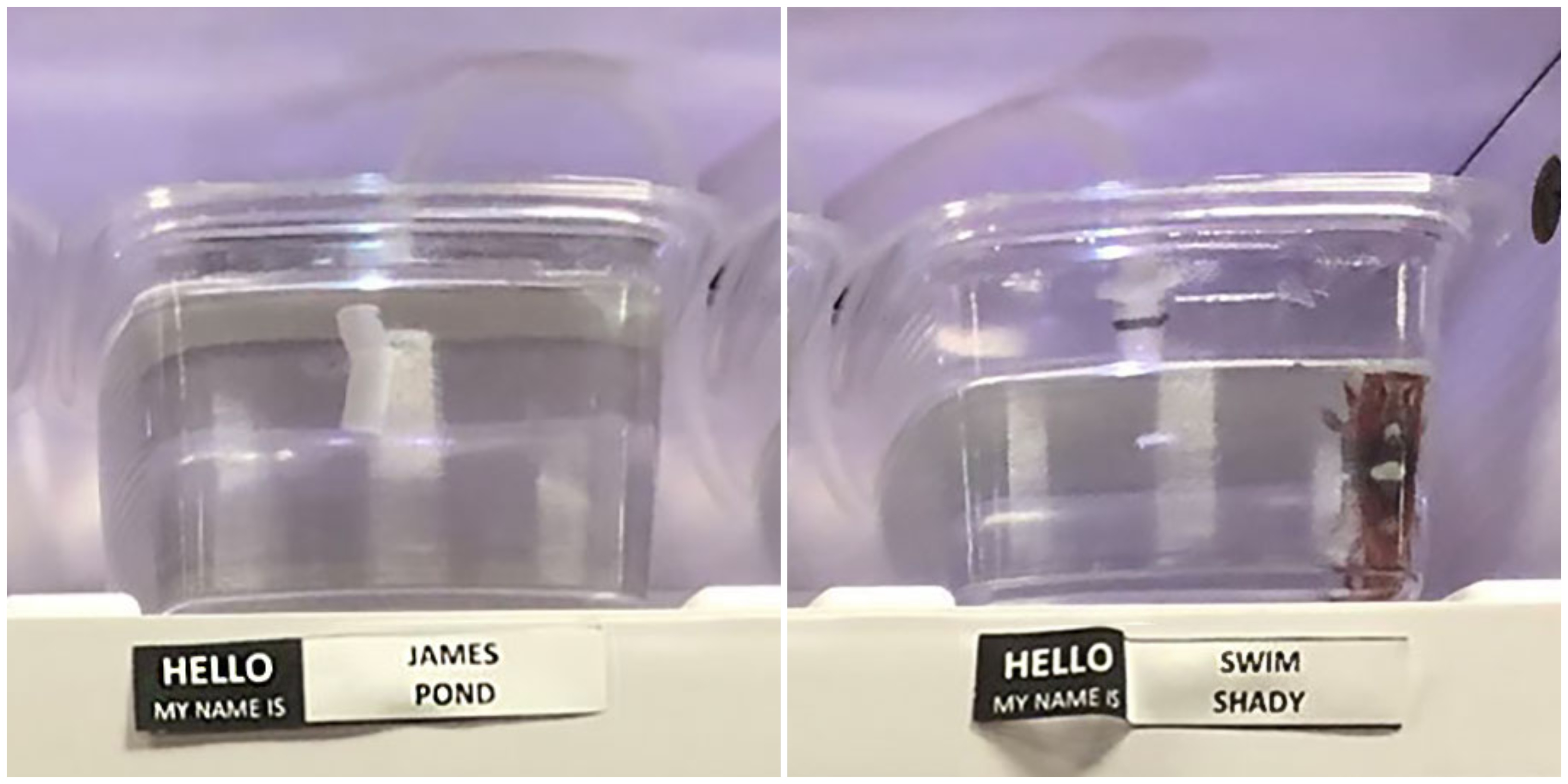 Pet Store Gives Celebrity Names To Their Fish And It Is Hilarious
