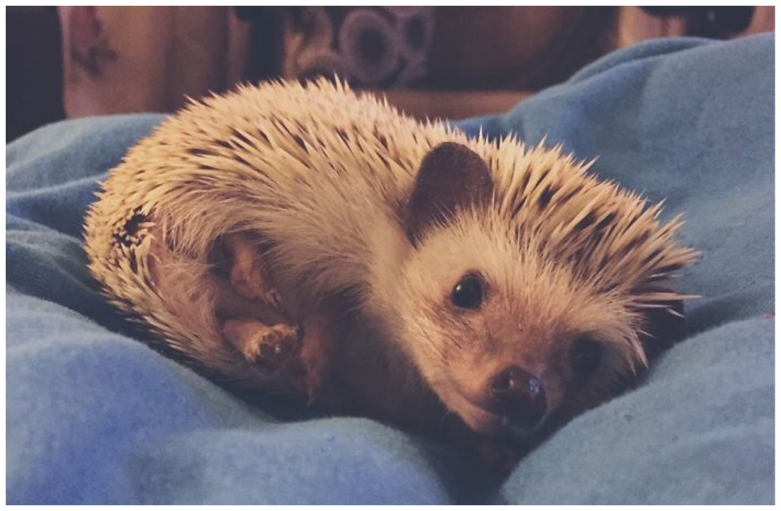 15 Of The Most Adorable Hedgehog Photos You Have Ever Seen
