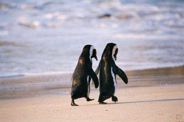 True Love – 11 Monogamous Animals That Stay Together All Of Their Lives