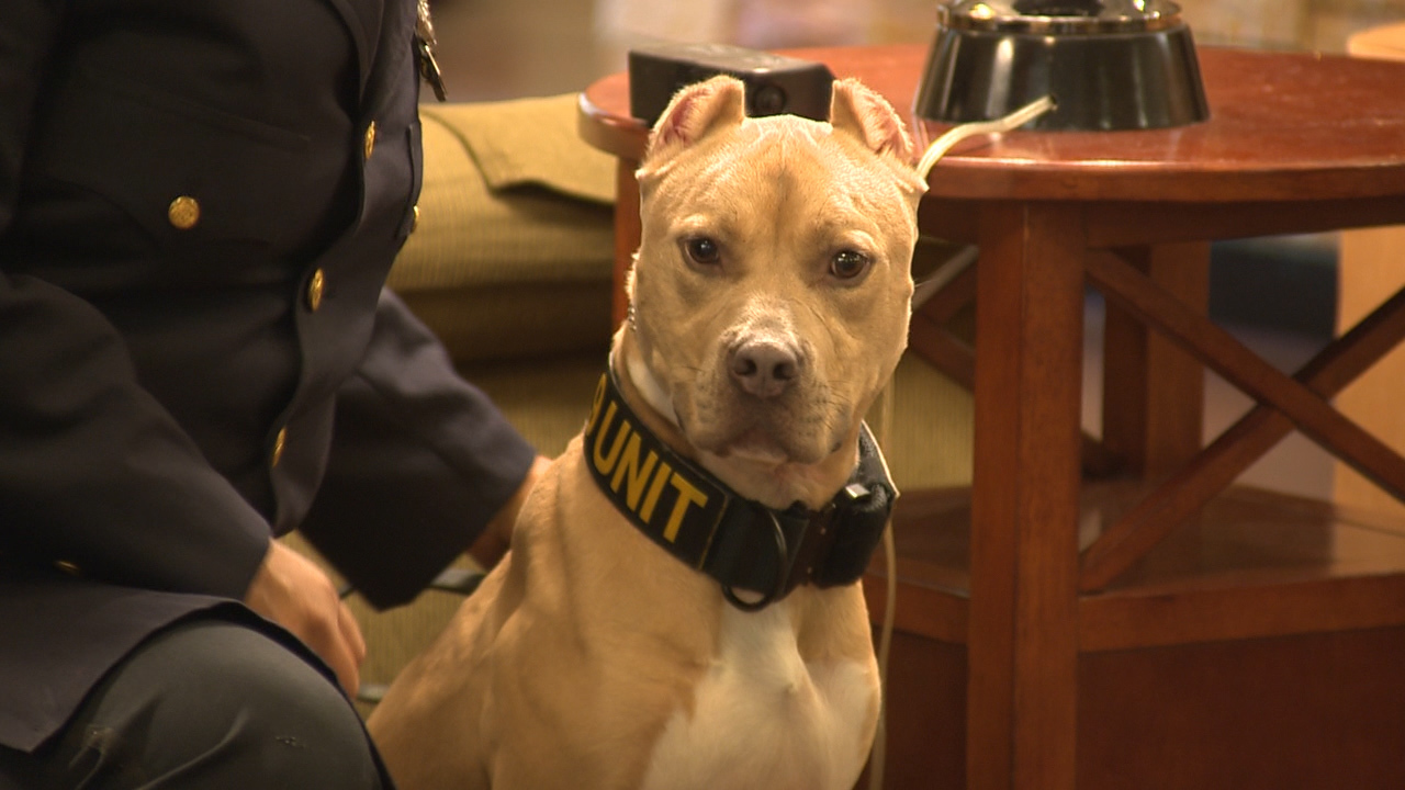 6 Pit Bulls Graduate From Narcotics Training To Become K9s Across US