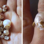 Adorably-Spooky Fairy Sculls Carved From Pearl By Japanese Jewelry Artist